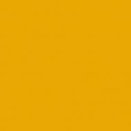CCS-Rembrandt-Sunflower